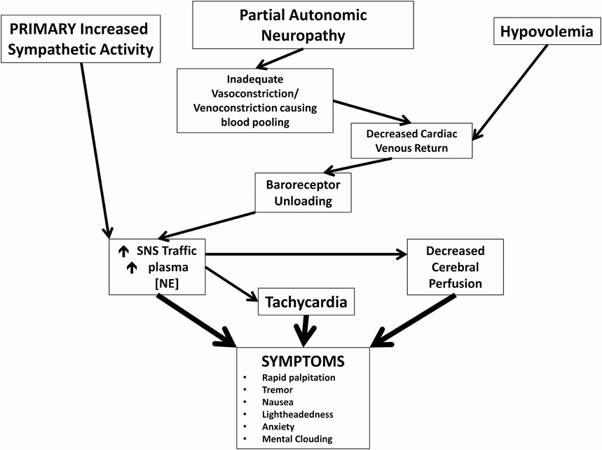 Figure 1. Pathophysiological mechanisms of postural tachycardia syndrome. Cartoon representation of how 3 major neuronal and hormonal abnormalities and their immediate effects may cause symptoms commonly associated with POTS.